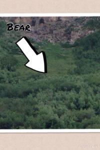 Bear near cathedral peak