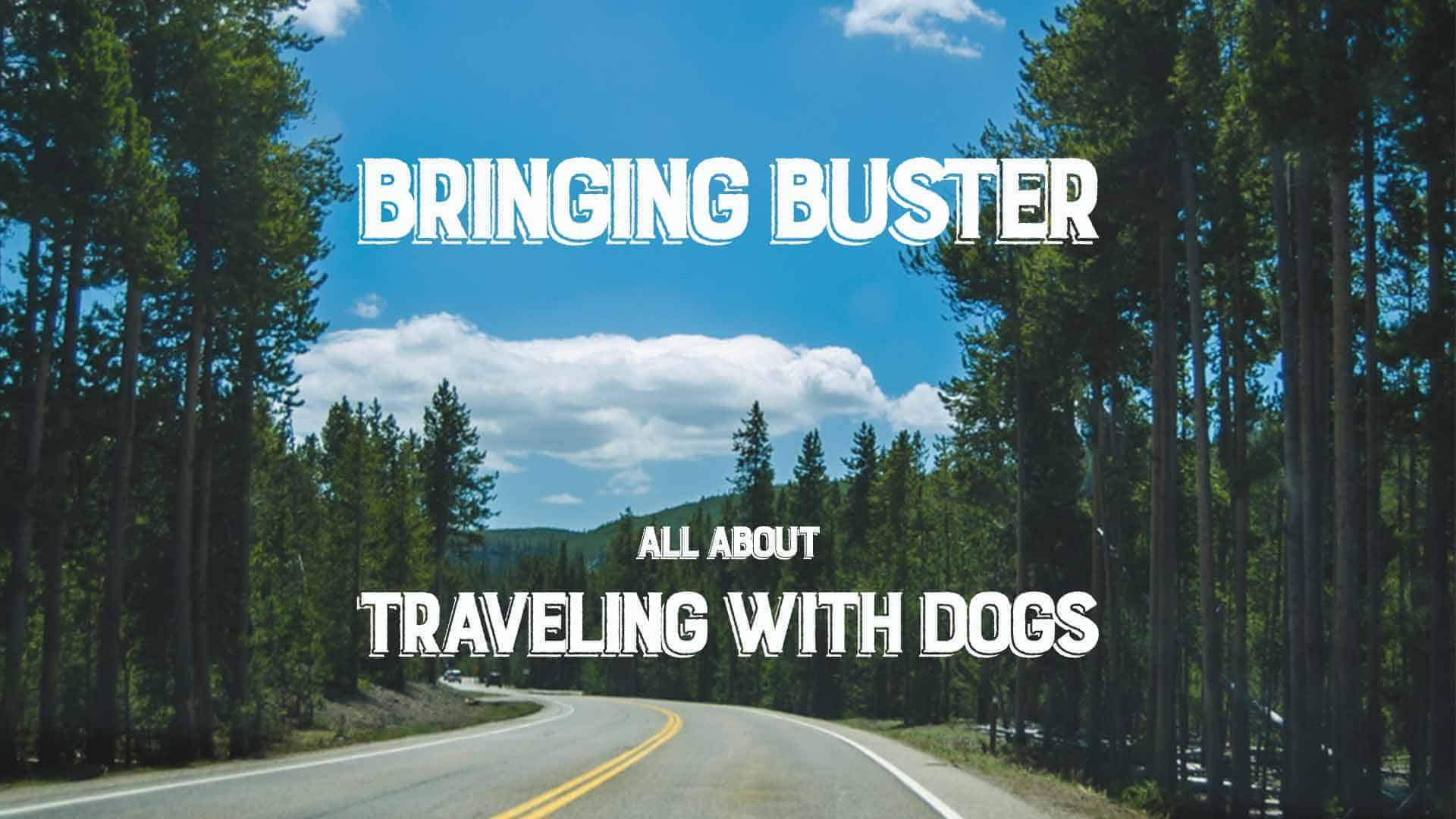 Bringing Buster: All About Traveling with Dogs