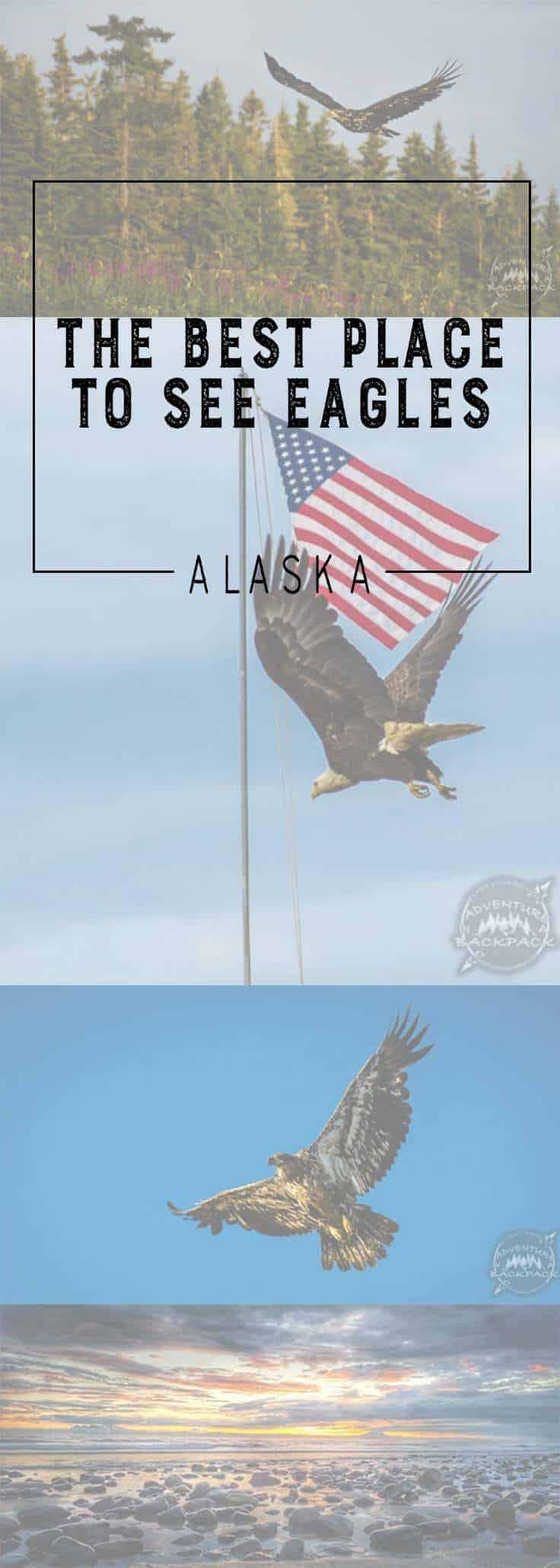 Alaska | Bald Eagles | Golden Eagles | Eagles Flying