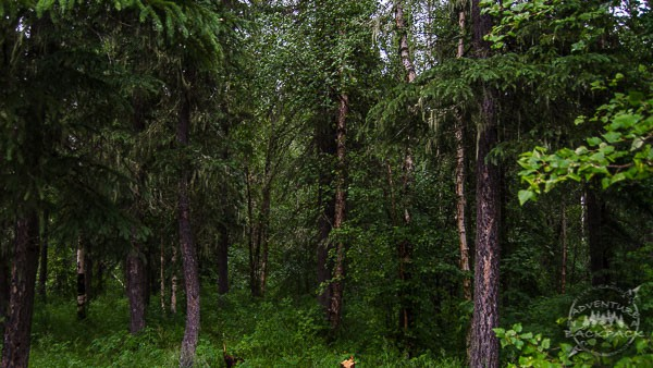 DSC 0151 - Boondocking in Fairbanks: Beautiful and Cheap Camping