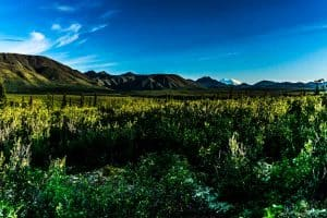 Denali-National-Park-11