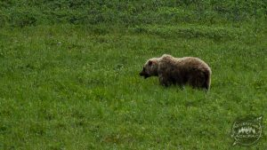 Denali National Park 14