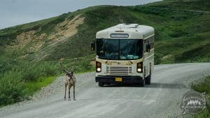 Shuttle Bus Denali National Park