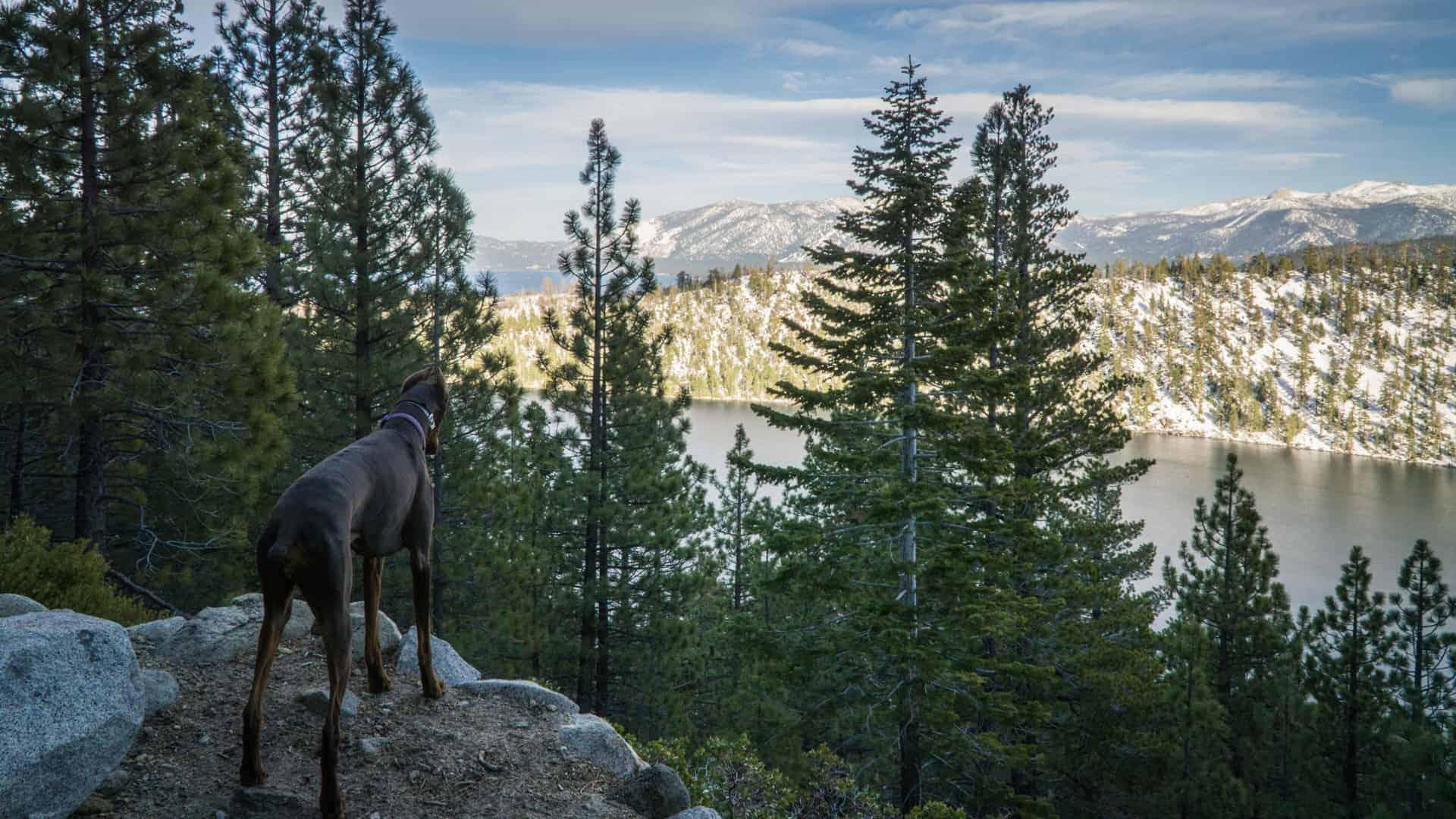 Dog Friendly Hike Near Lake Tahoe-6