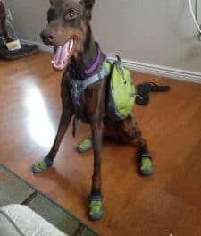 Dog Boots: Ruffwear Summit Trex Review