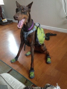 Dog Boots: Ruffwear Summit Trex Review