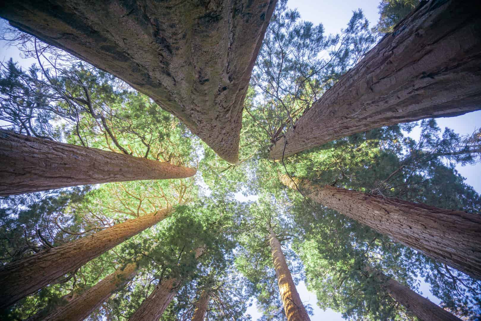 Sequoia National Park Fall 1 - Why You Should Visit Sequoia National Park in the Fall