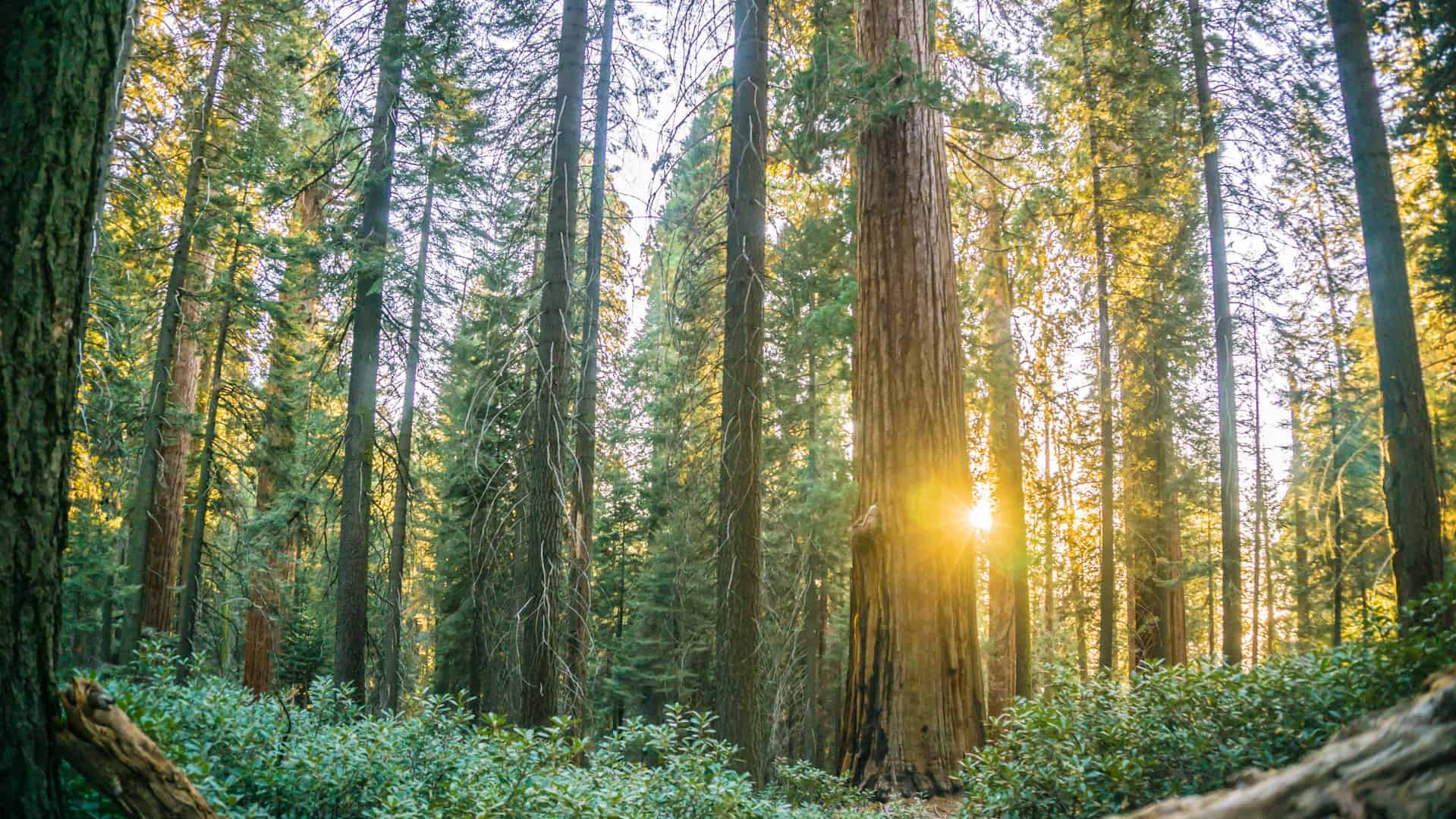Why You Should Visit Sequoia National Park in the Fall ...