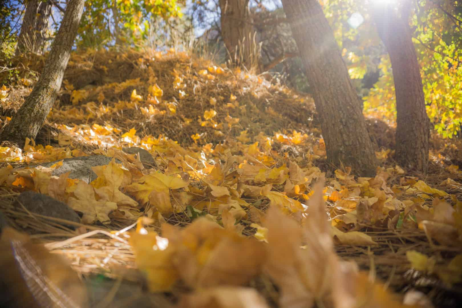 Sequoia-National-Park-Fall-4