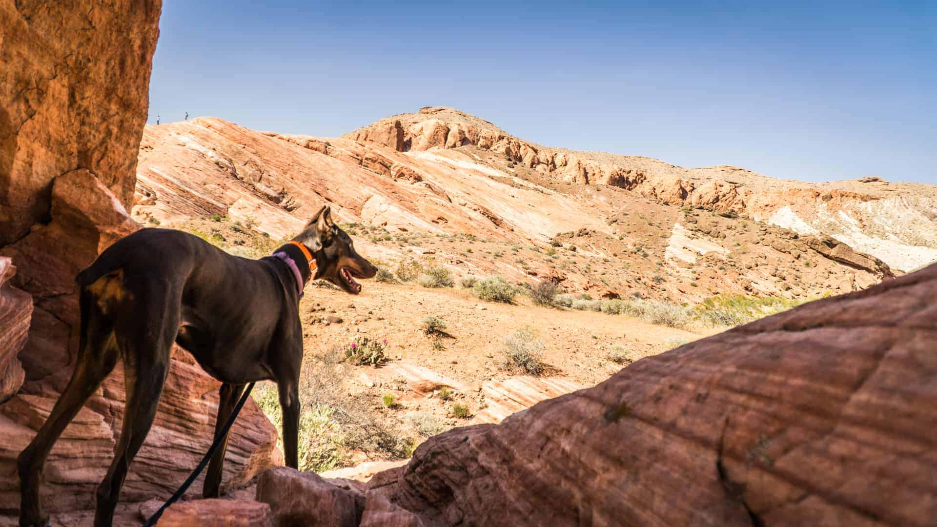 Valley of Fire State Park-2