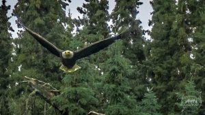 Nate got an awesome shot of an eagle flying by. It would've been better to see his face when it swooped by him!